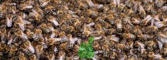 Фото пчелиного подмора