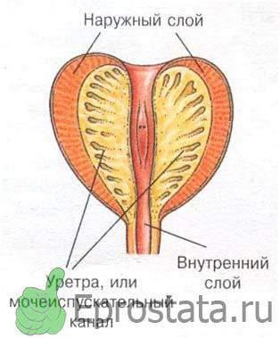Методы проверок простатита