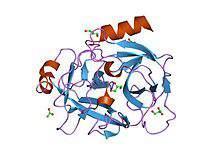 Молекула ПСА