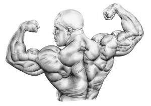 uroven'-testosterona