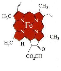 Группа гемоглобина