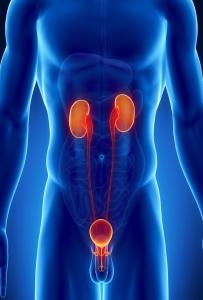 Заболевание мочеполовой системы влияет на потенцию
